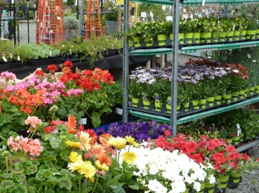 Lots of bedding plant color arriving in spring