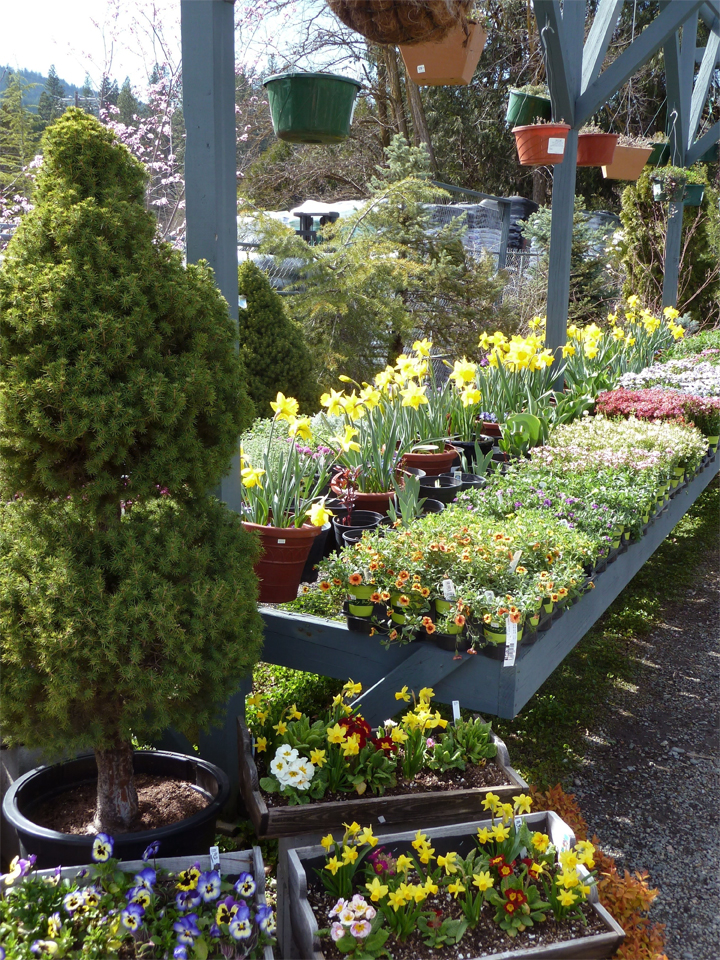Spring bedding plants