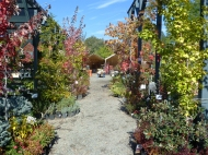 A great variety of plants on display invite all to stroll through the Nursery