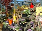 Fall plants and products on display