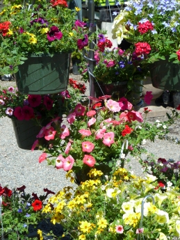 Hanging baskets full of summer color