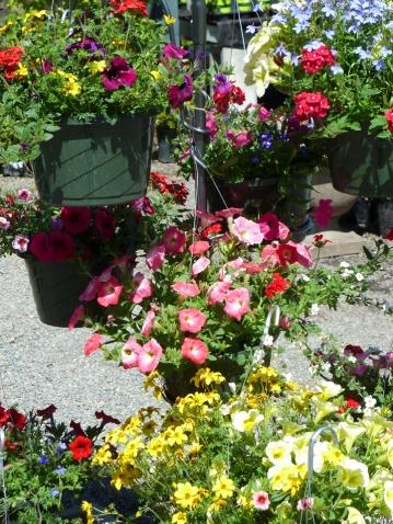 Hanging baskets full of summer color