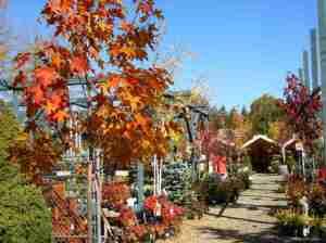Trinity Nursery in the autumn