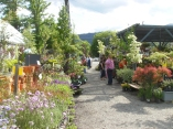 Shoppers have lots of plants to choose from