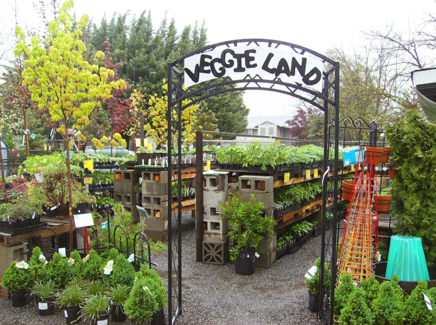 Visit Veggie Land for all your vegetable starts