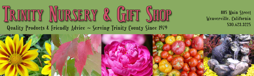 Trinity Nursery & Gift Shop