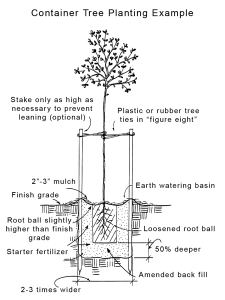 Diagram of container plant planting tips