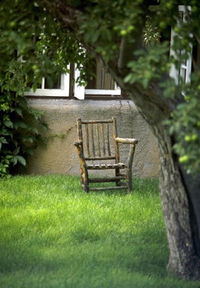 Backyard Trees For Shade : Shade Tree