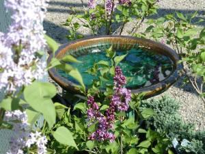 lilacs-and-birdbath