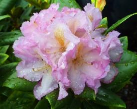 trinity-nursery-rhodie-pink